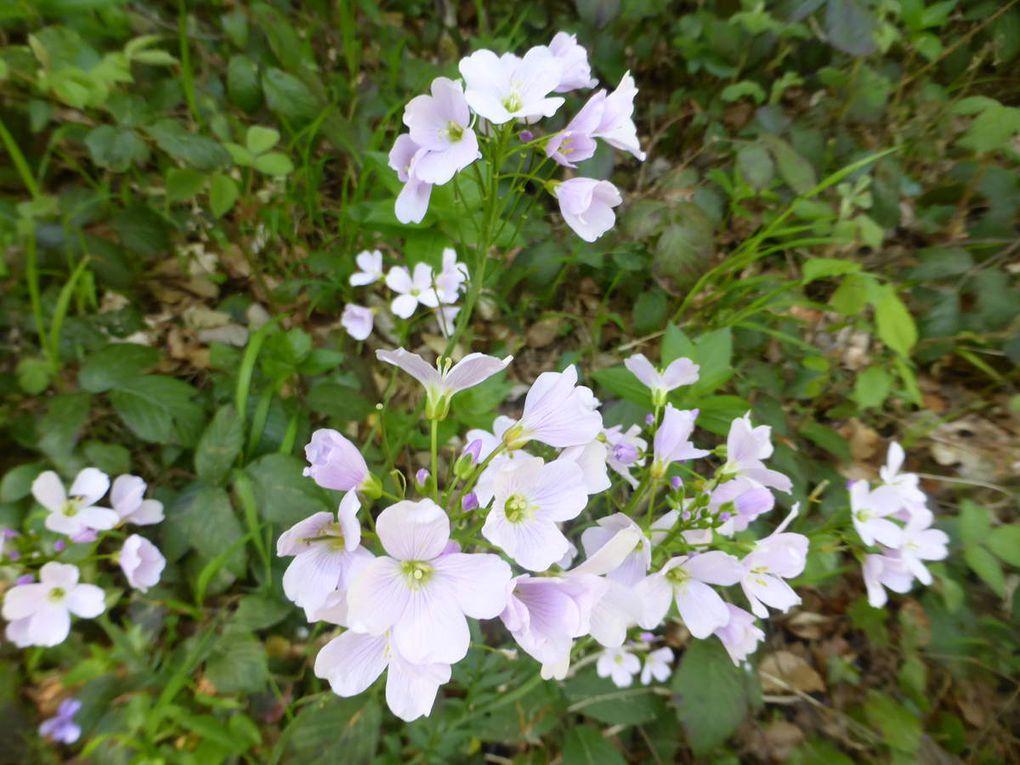 Cathares : Mercredi 4 mai - Bugarach