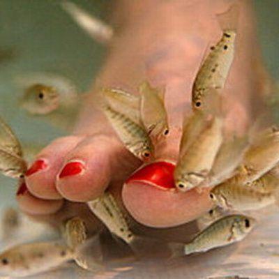 De beaux petits pieds grâce à de jolis petits poissons !!
