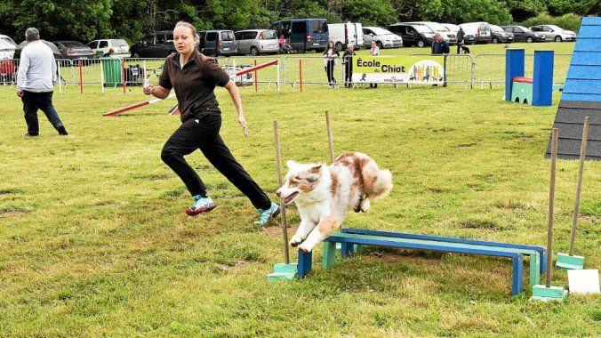 Saint-Brieuc. Concours d'agility solidaire le jeudi 30 mai