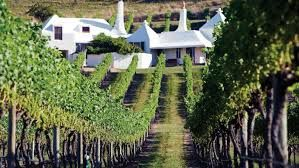 The vines in the Hawke's Bay Region
