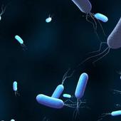 VIDEO. Résistance aux antibiotiques : 10 millions de morts par an en 2050 ?