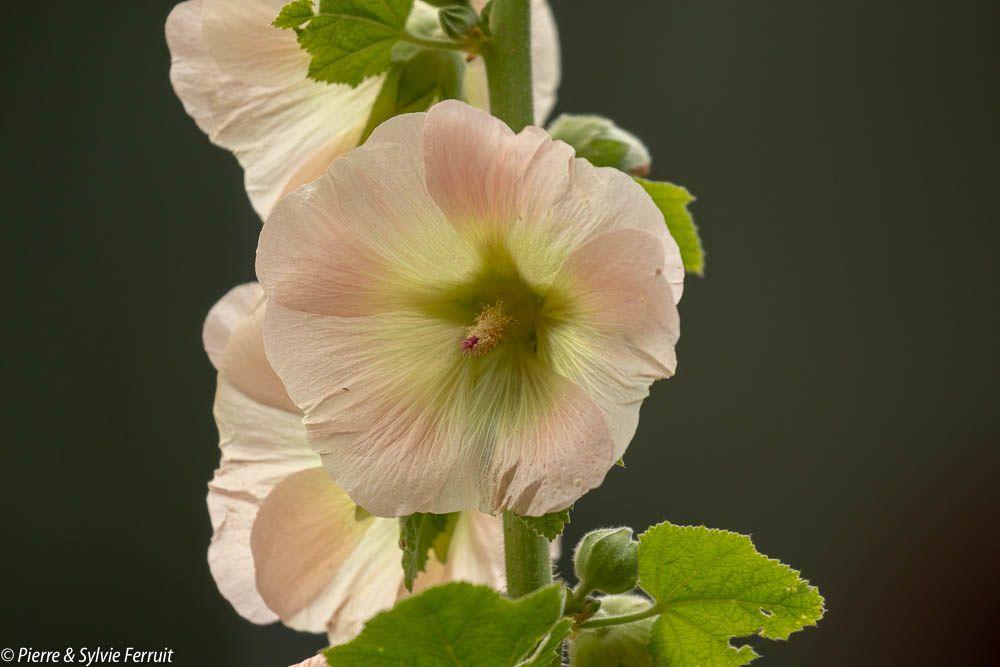 Fleurs - Flowers - Bloemen