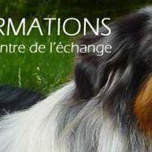 Accueil - L'APPROCHE PAR L'ANIMAL : Association de Zoothérapie de Côte d'Or