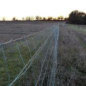 Une truffière clôturée sur des dizaines d'hectares...