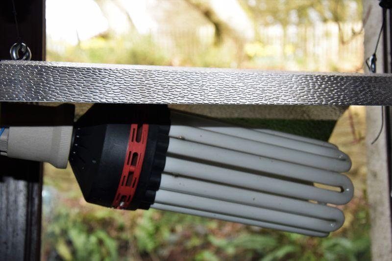 Ampoule CFL pour éclairer les poivrons