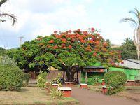 La ville de Hanga Roa
