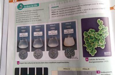 Organisation et fonctionnement des organismes unicellulaires