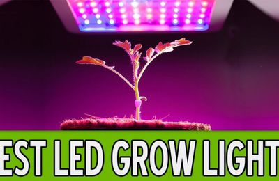 Selecting the best grow lights for indoor Cannabis cultivation!