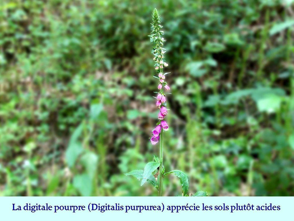 """Les """"8 Km"""" à Corcoué-sur-Logne."""