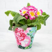 Fabric Covered Flower Pots - Sweet Red Poppy