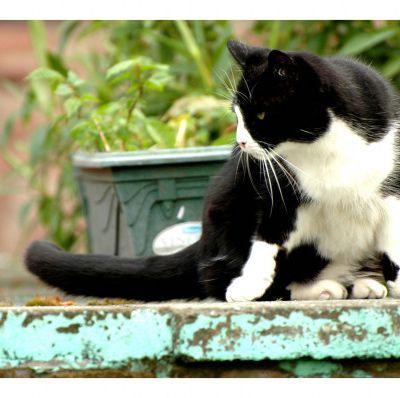 Pourquoi avoir une curiosité de chat ?