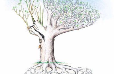 Contrôle de stabilité des arbres par l'évaluation visuelle : la méthode V.T.A.