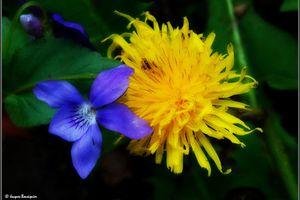 Flirt floral