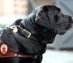 Cani guida: cambiare cultura per cambiare la legge