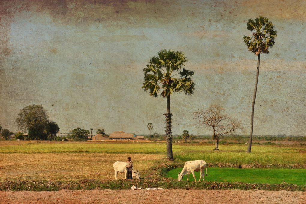 Album - album-photo-Cambodge