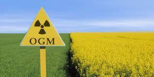 OGM: quand les services de l'Etat font de la désinformation