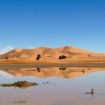 Camel trek for overnight in sahara desert