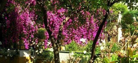 Les fleurs andalouses