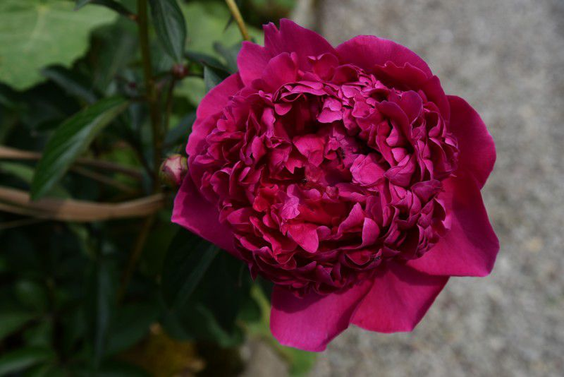 Le mois de juin fleuri