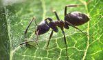 L'organisation secrète des fourmis (Doc) [VF]