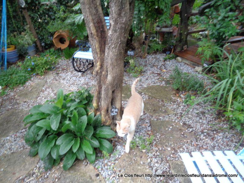"""Balade dans le jardin avec mon chat """"Déluge """" après une petite sieste ......Les photos sont de moi ,prises cet après midi ....."""