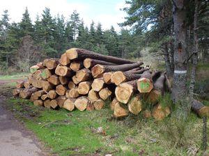 Hum ! La bonne odeur des forêts...