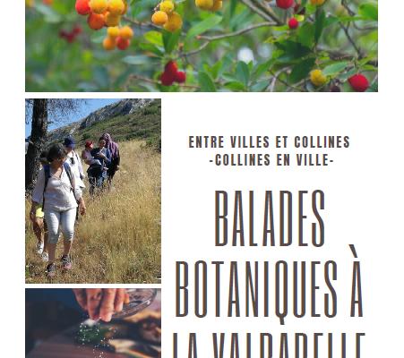 A télécharger : livret de balades botaniques