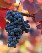 #Merlot Producers New South Wales Australia Page 2