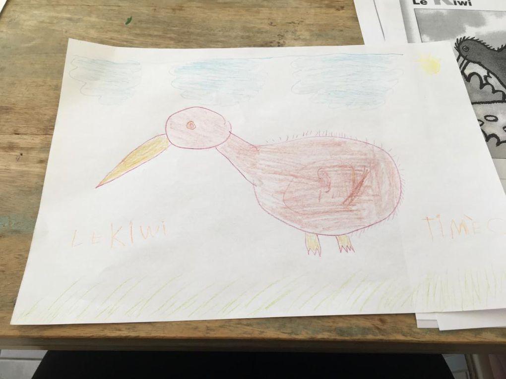 Lou a dessiné un kiwi (oiseau néo-zélandais). Bravo ! Il a été rejoint par les dessins de Basile, Margaux, Amaël,  Lucas et Timéo.