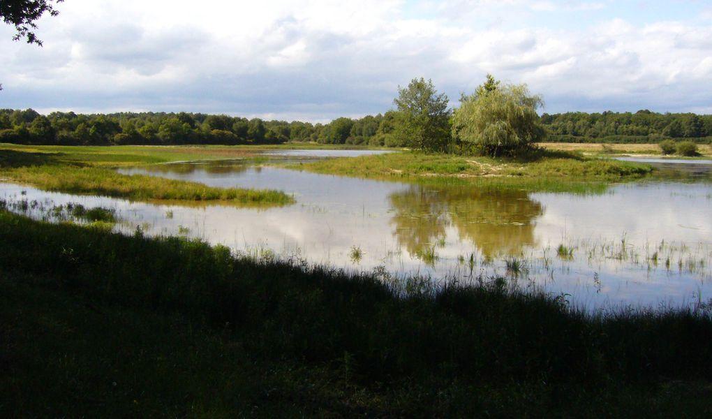 Aménagements et études d'étangs d'agrément, écologiques ou cynégétiques
