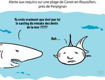 Alerte aux requins sur une plage de Canet-en-Roussillon, près de Perpignan