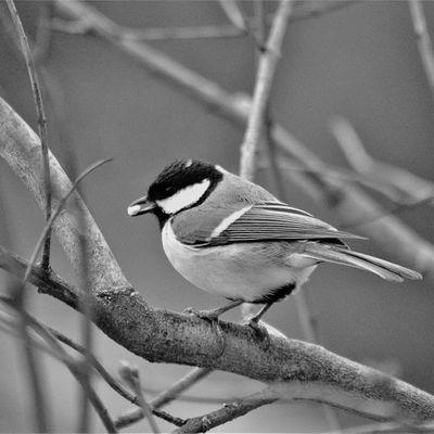 Soyons oiseaux 2