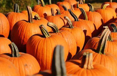Halloween : Frissonner pour mieux cocooner
