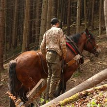 Horses and Men in Slovak forests