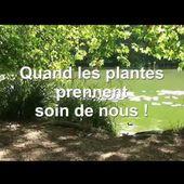 A la rencontre des plantes sauvages 2