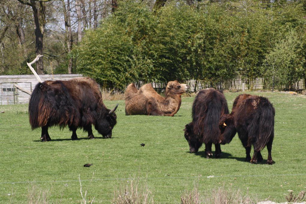 Vues prises dans le Parc de Branféré (Morbihan, près de Muzillac) le 25 avril 2013.
