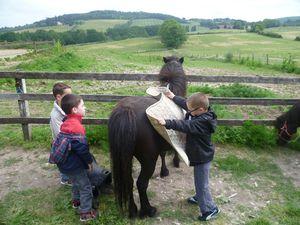 Et enfin, prépartion des poneys  : mise en place du tapis, de la selle....