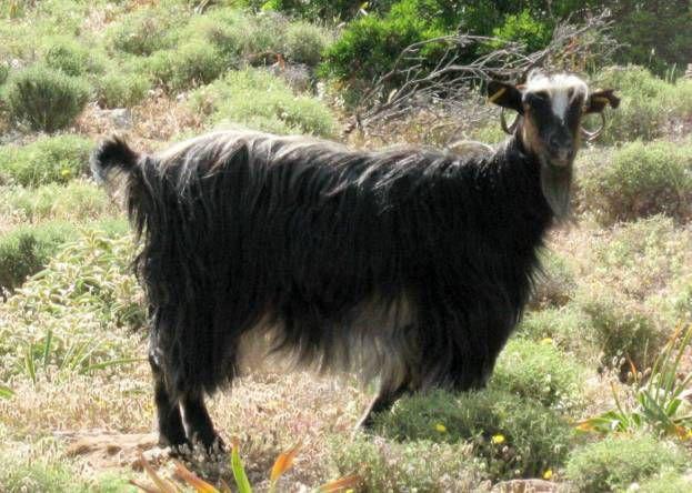 Crète - de Paleochora à Sougia