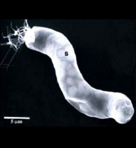 Microbes fossiles extraterrestres découverts.