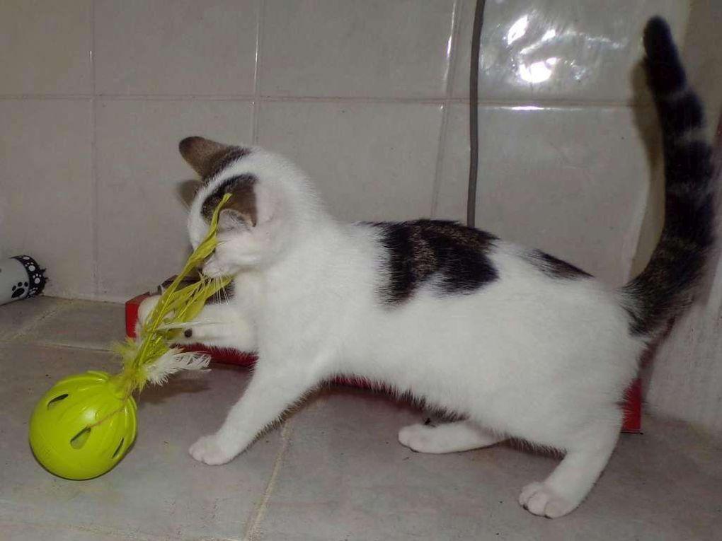 Quelques photos supplémentaires en diaporama. Ah ! Le jeu des chatons ....