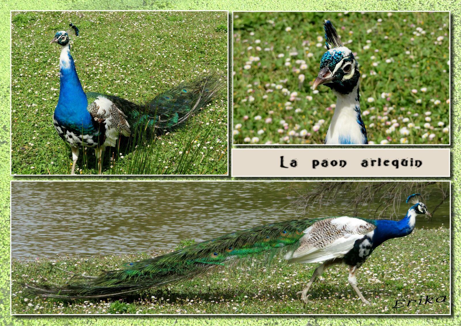 Le Marais aux oiseaux...
