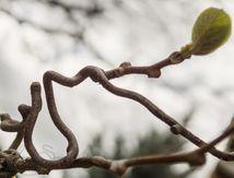 L'équilibriste qui marche à genoux sur une branche ...