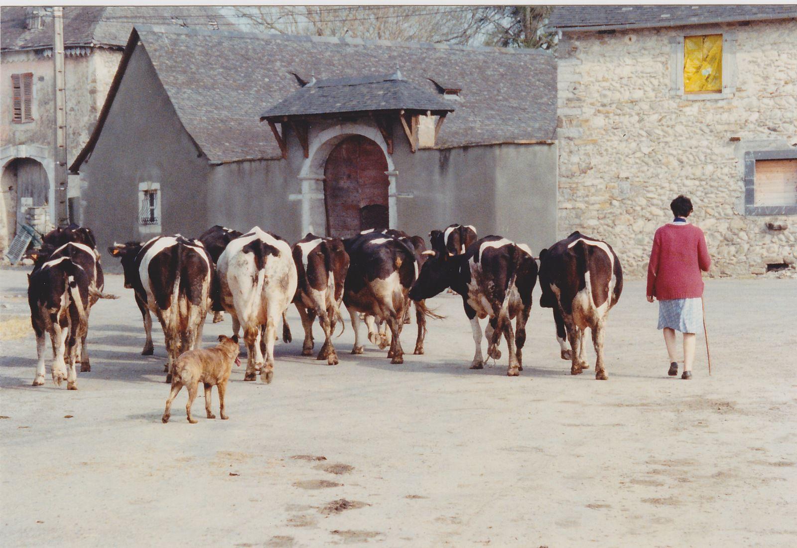 Les Ogeulois reconnaitront le troupeau et sa propriétaire. Bientôt d'autres images vont arriver grâce auxquelles on va encore plus remonter le temps dans l'histoire du village