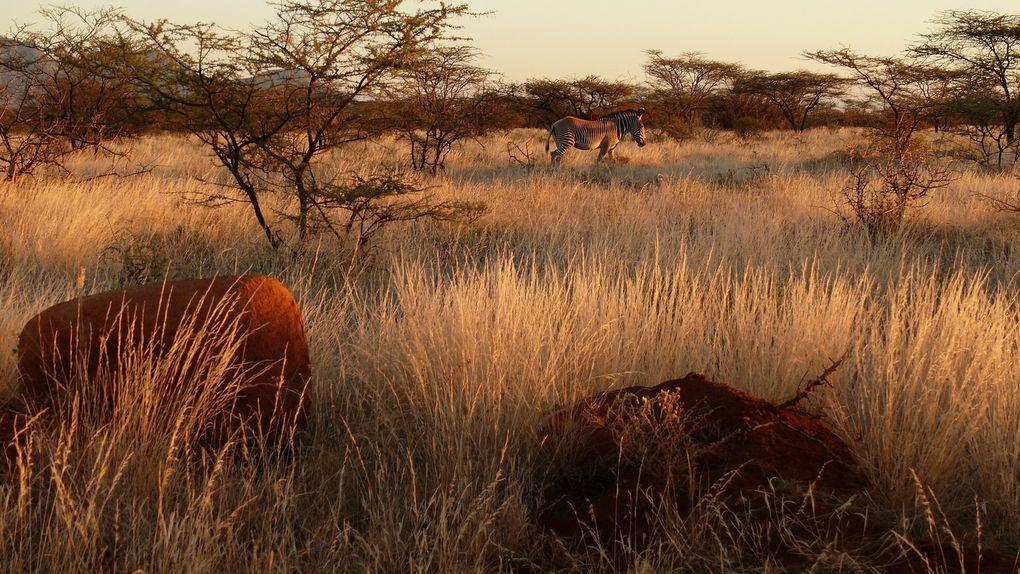 Few shots of the amazing North Kenya