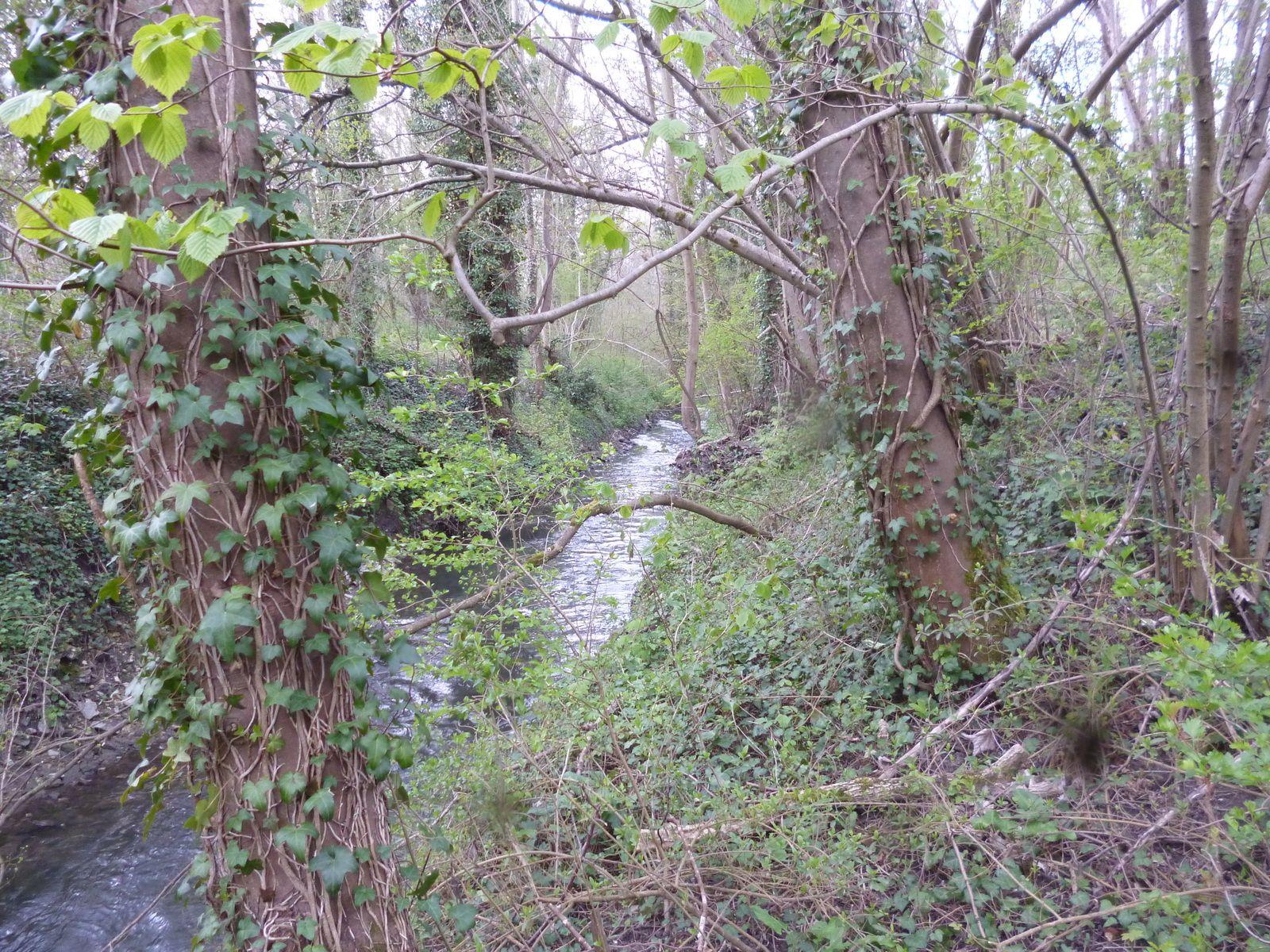 La Beuvronne à Souilly près du pont de pierre
