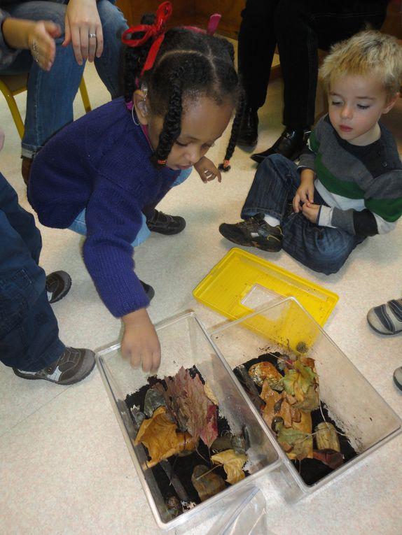 Un élevage d'escargots dans les classes de TPSM et PSM du CEJS.