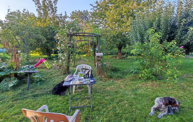 Les chiennes, le jardin ... et une surprise ;-)