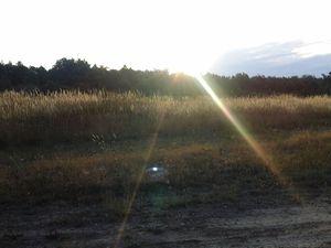 Le lever du soleil sur la première  partie arborée depuis 5 jours... quelques éoliennes dans une trouée de forêt.