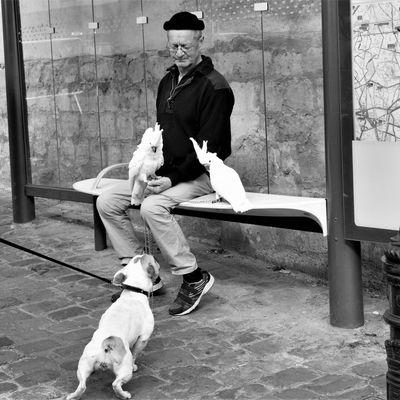 21 mars. Le chien et les perroquets. Rencontre au sommet. Place Jean Marais.