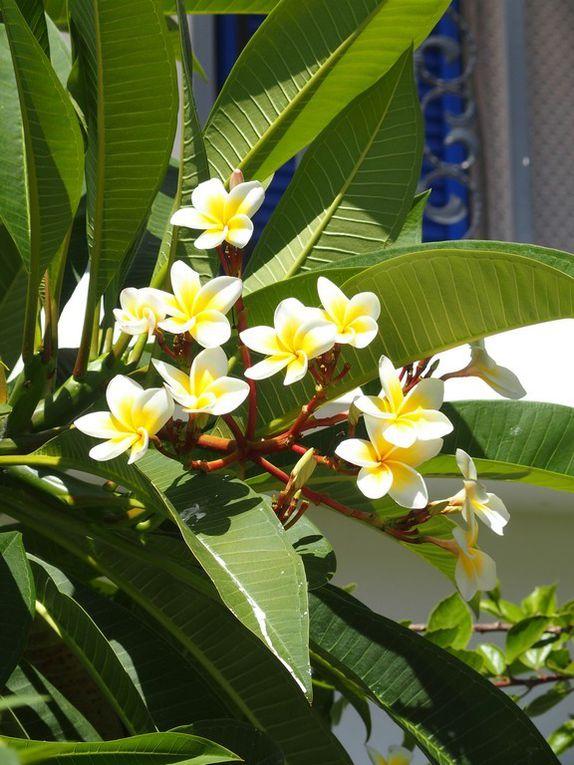 En attendant nos amis, nous admirons la végétation ....luxuriante !